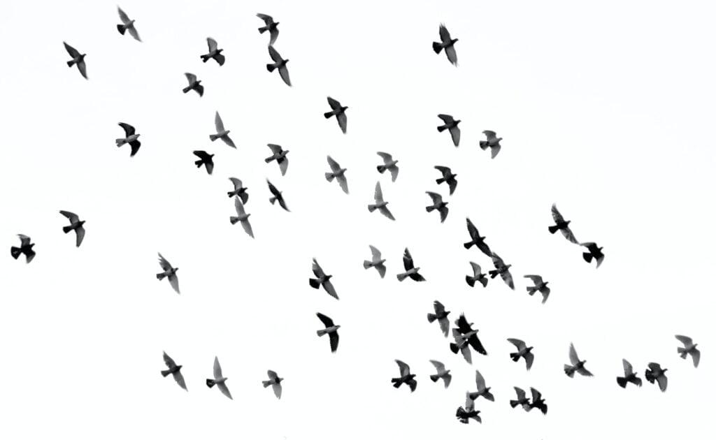 fugleflokk som flyr